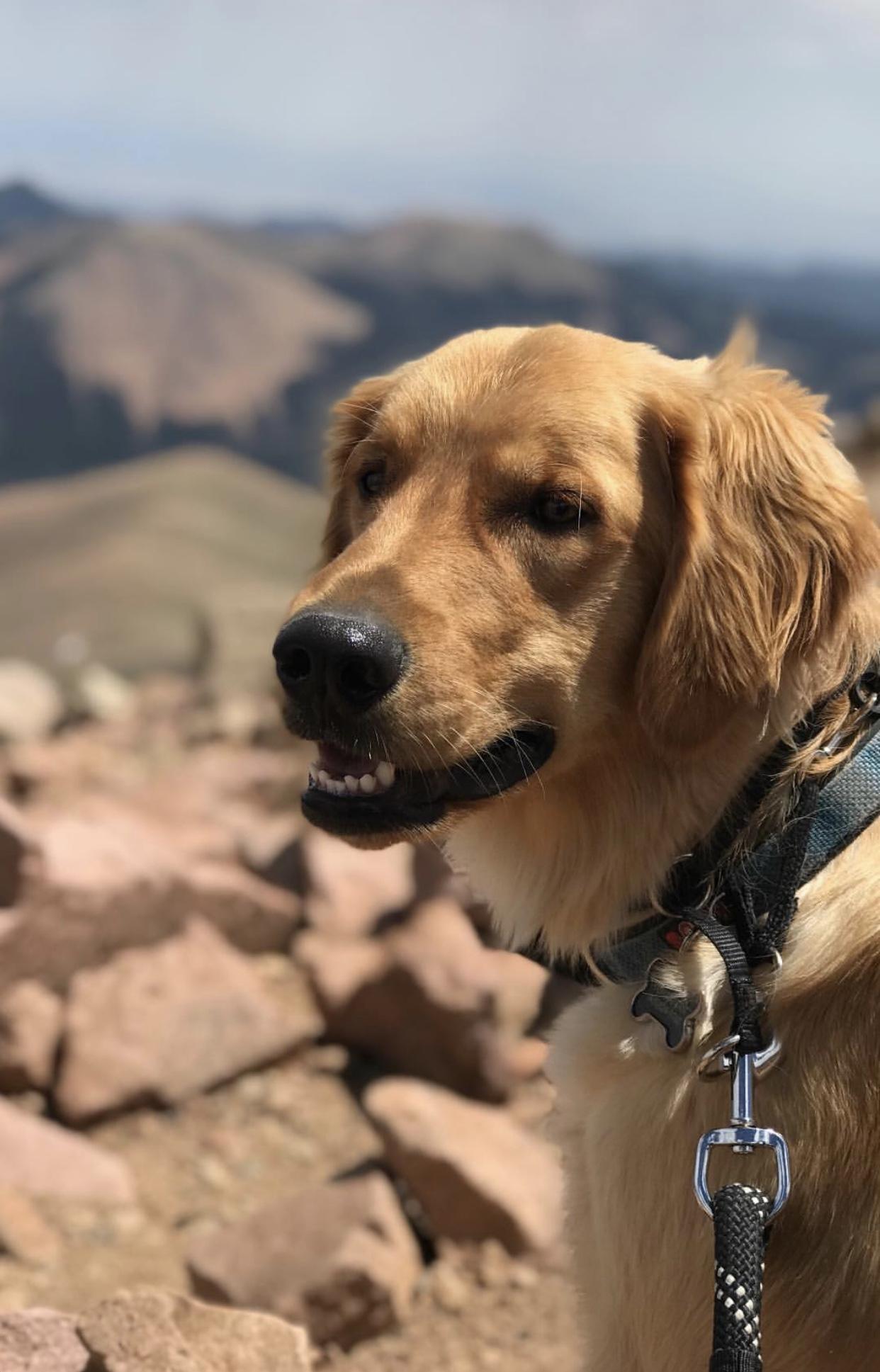 Aaa Pet Travel Photo Contest
